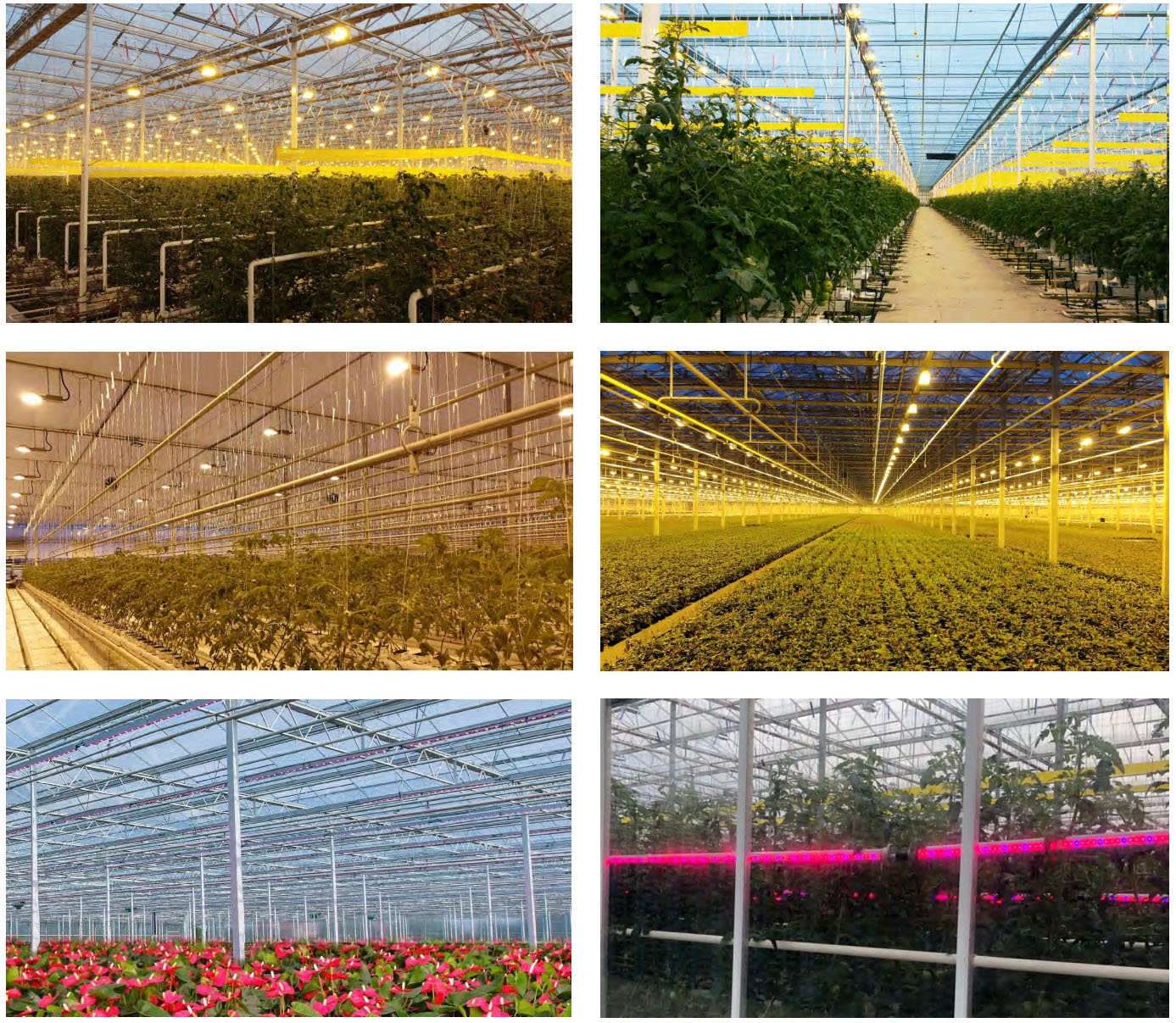 Grow Light Application Picture